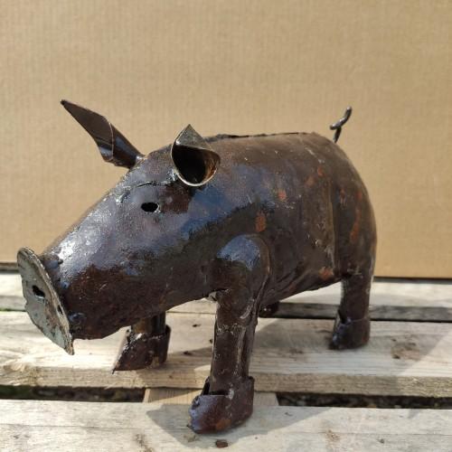 Medium pig
