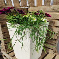 Tall cream planter