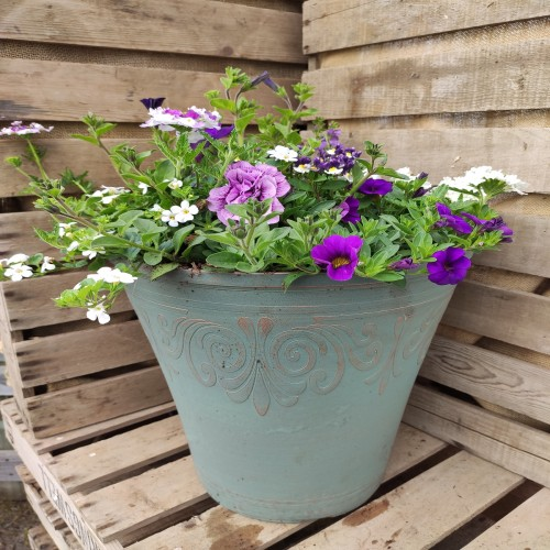 Medium height plastic green planter planted in purple and white