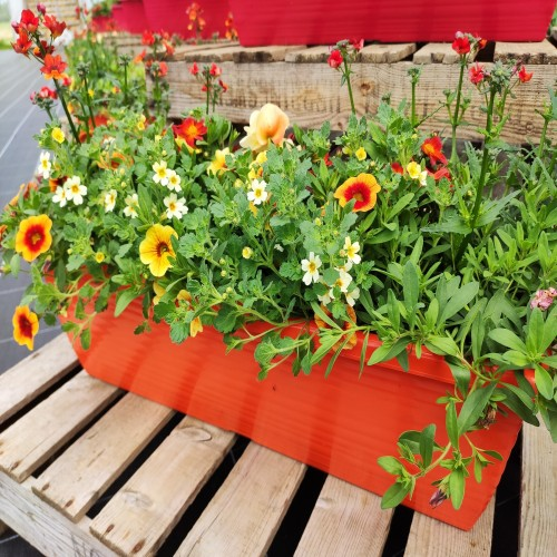 Window box 60cm orange