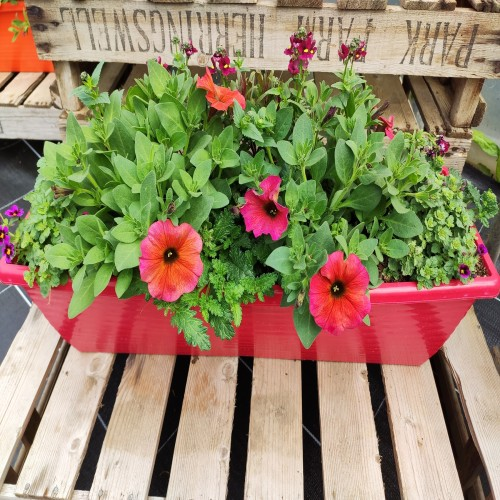 Window box 60cm red