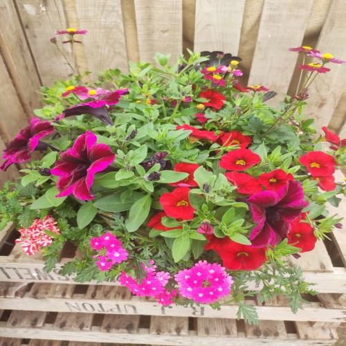 Hanging basket 35cm -double planting
