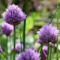 Légumes et Plantes Aromatiques