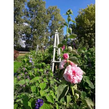 Open Weekend at English Garden Plants